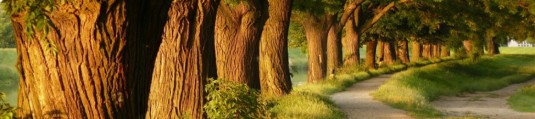 cropped-beautiful_trees_wallpaper_5hkku